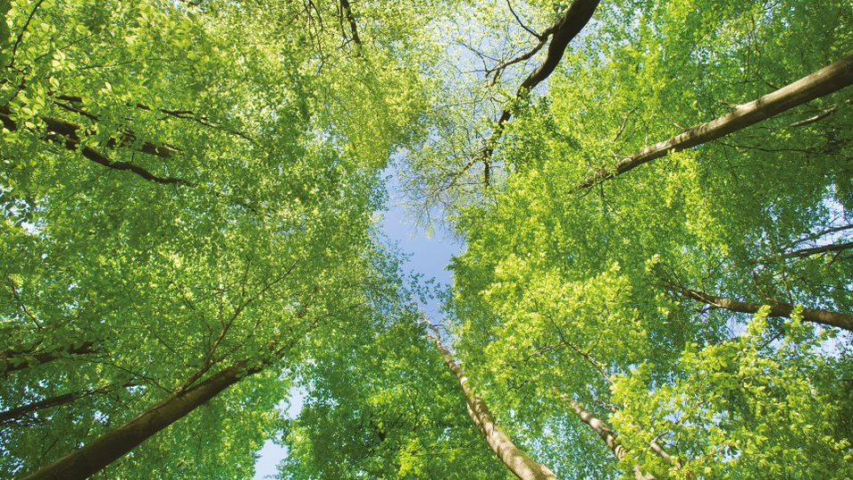 Ekologiczne lasy Fontaines, Burgundia, Francja.